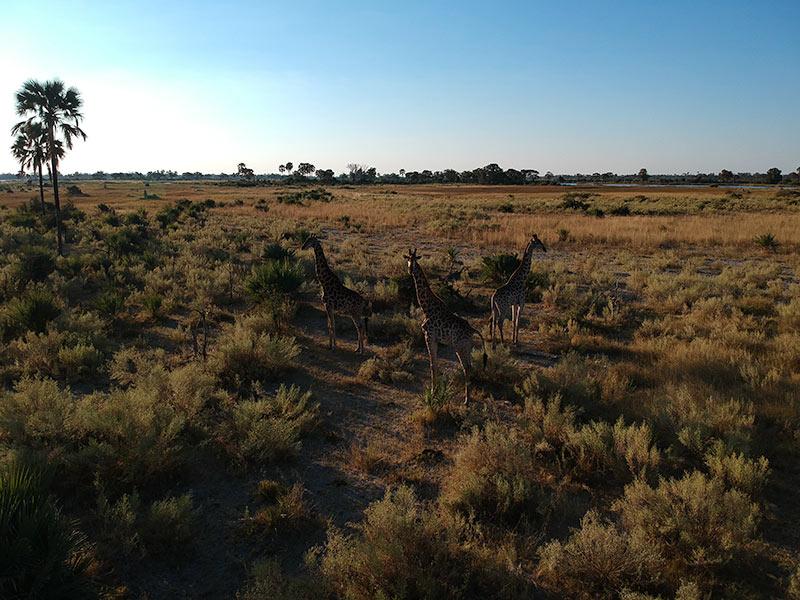 Botswana droneshot