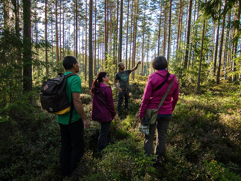 simon_green_forest_walk_3-1
